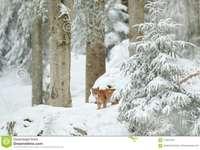 Χιόνι και χιόνι