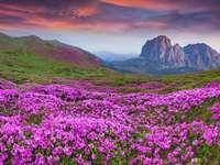 A virágok rétje a hegyekben
