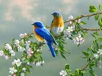 Πολύχρωμα πουλιά