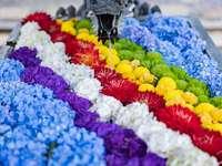 Docela plovoucí květiny