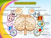 Memória, megtartás és tanulás