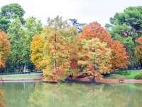 staw i kolorowe jesienne drzewa