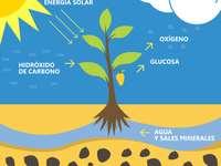 Vegetal Nutricion