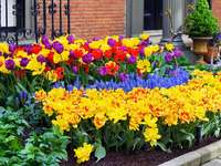 Spring flowers in front of the house