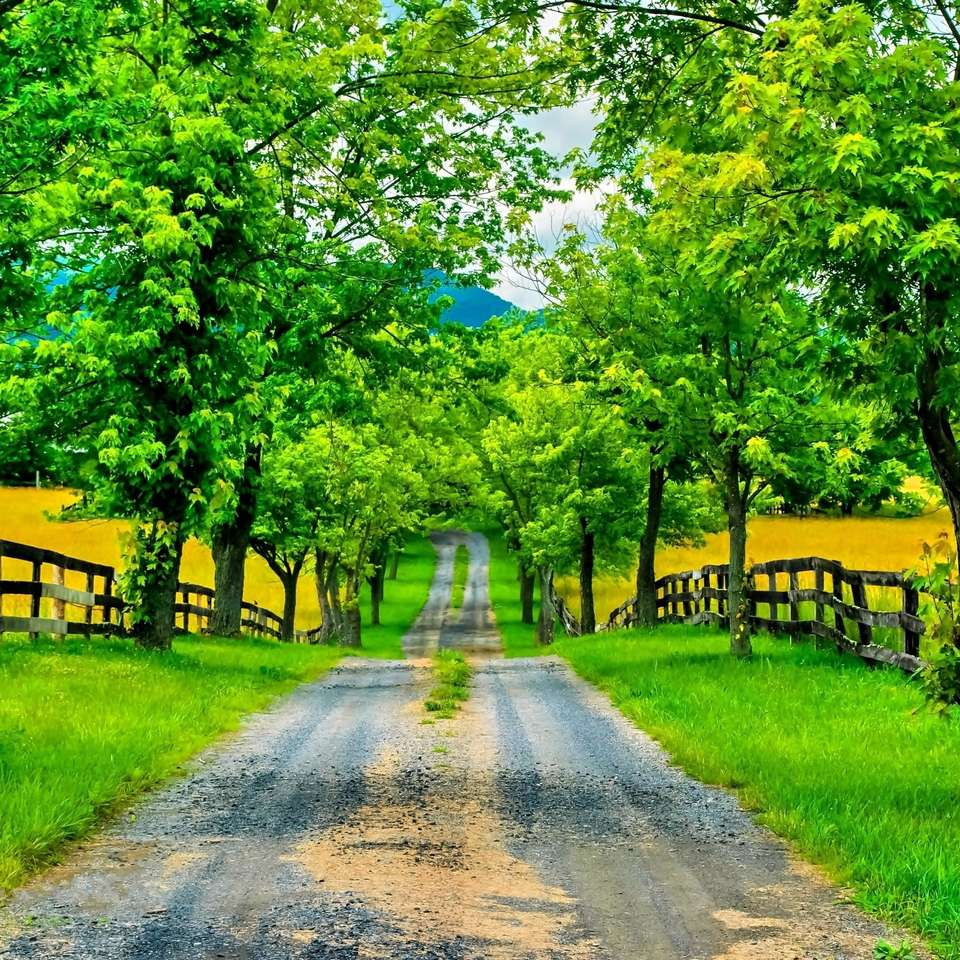 Weg onder velden