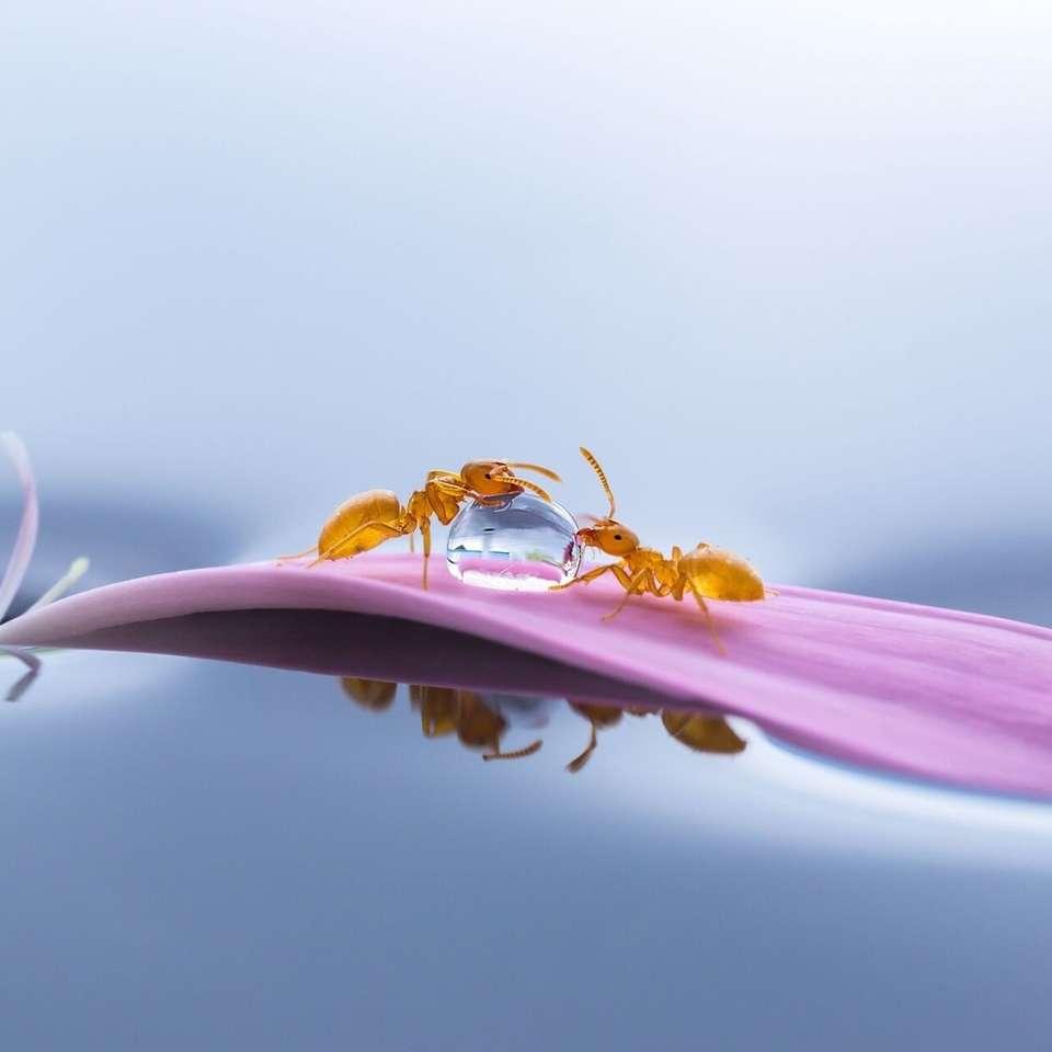 Grafik - Ameisen auf einem Blütenblatt
