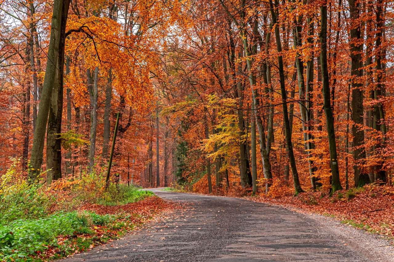 Percorso nella foresta, Europa