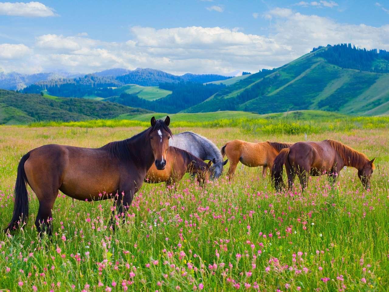 La manada de caballos está pastada en un prado verde de verano.