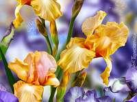 Iris e viole del pensiero