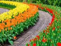 Ogród z tulipanami
