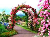 Rhododens v parku