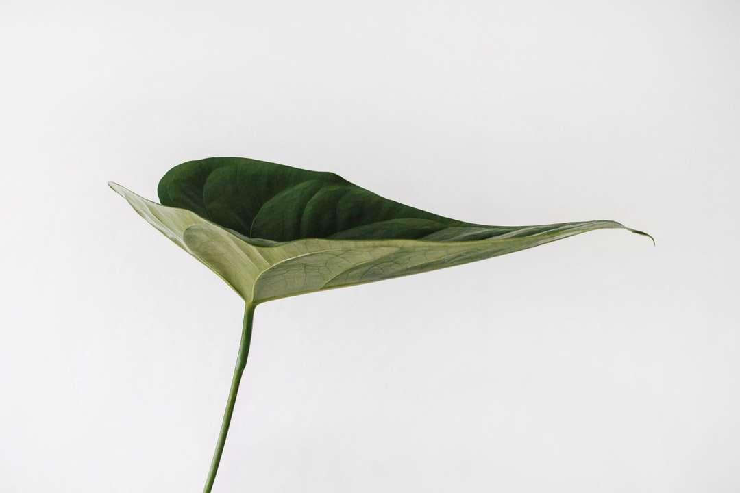 Φωτογραφία πράσινων φύλλων