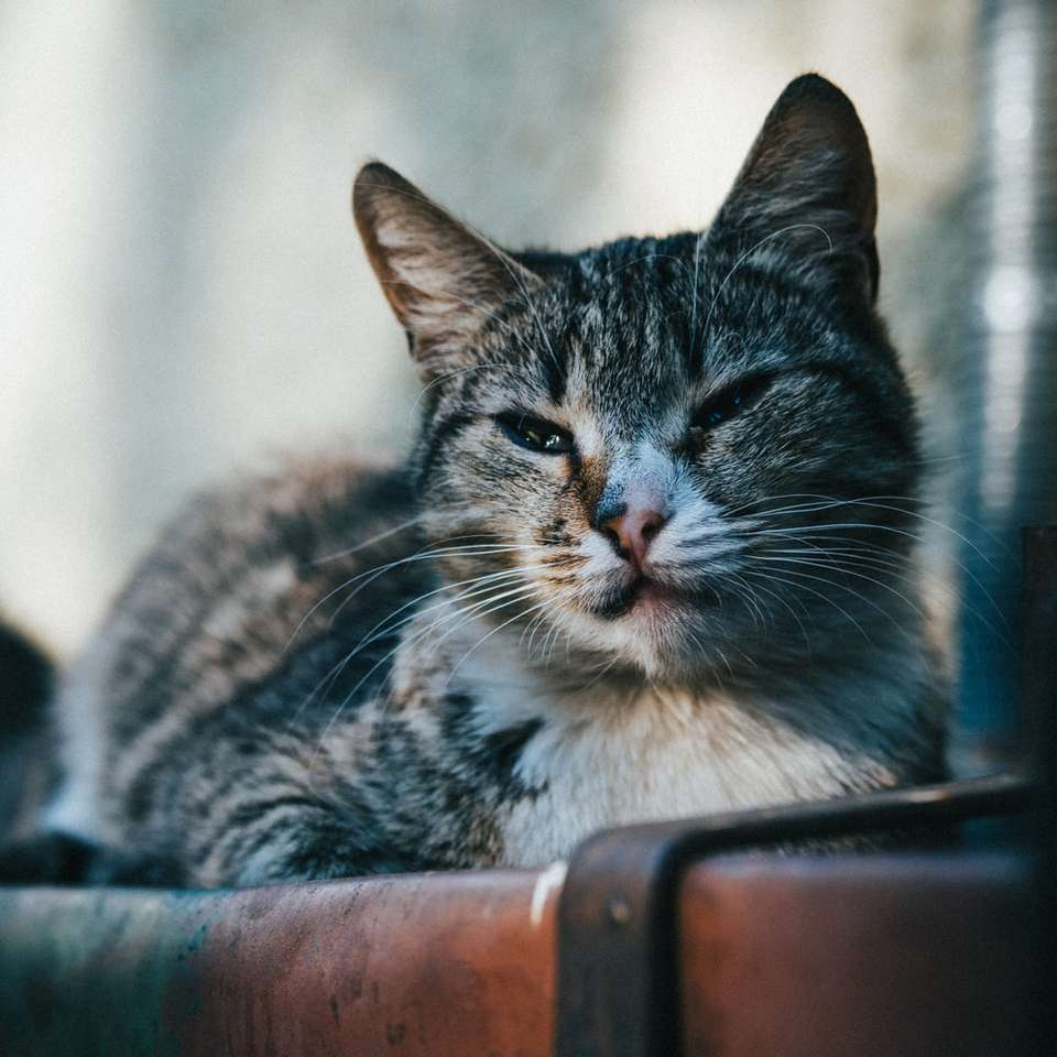 Brown pręgowany kot na brązowym plastikowym pojemniku