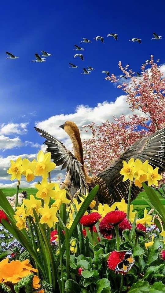 Jarní květiny skládačka