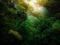 Πράσινα δέντρα στο δάσος κατά τη διάρκεια της ημέρας
