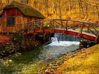 River with a bridge and a house in the forest