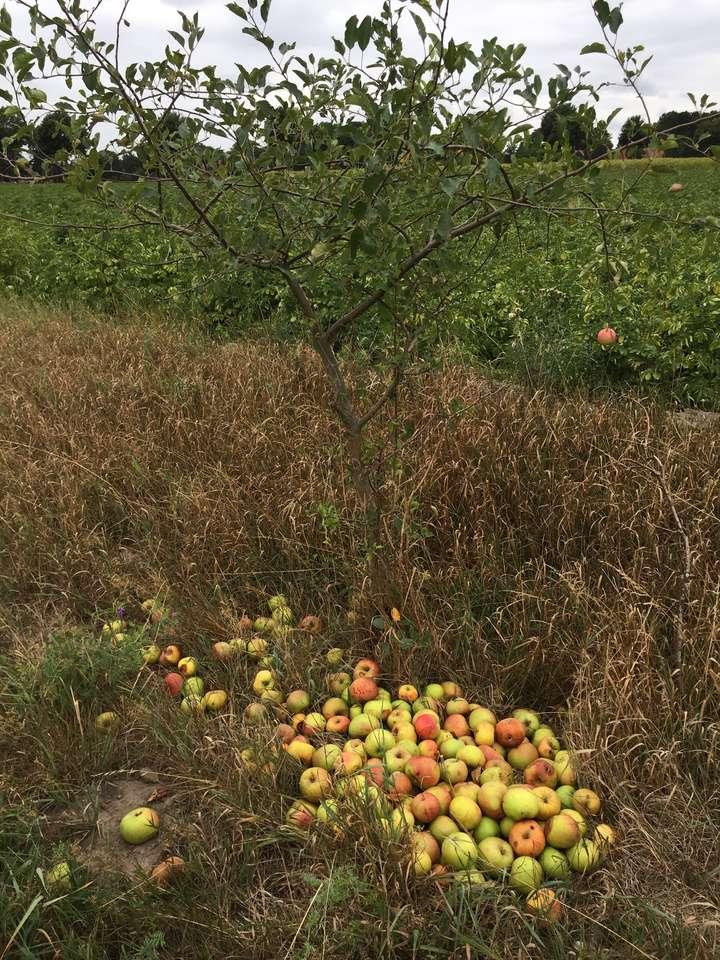 alma kirakós
