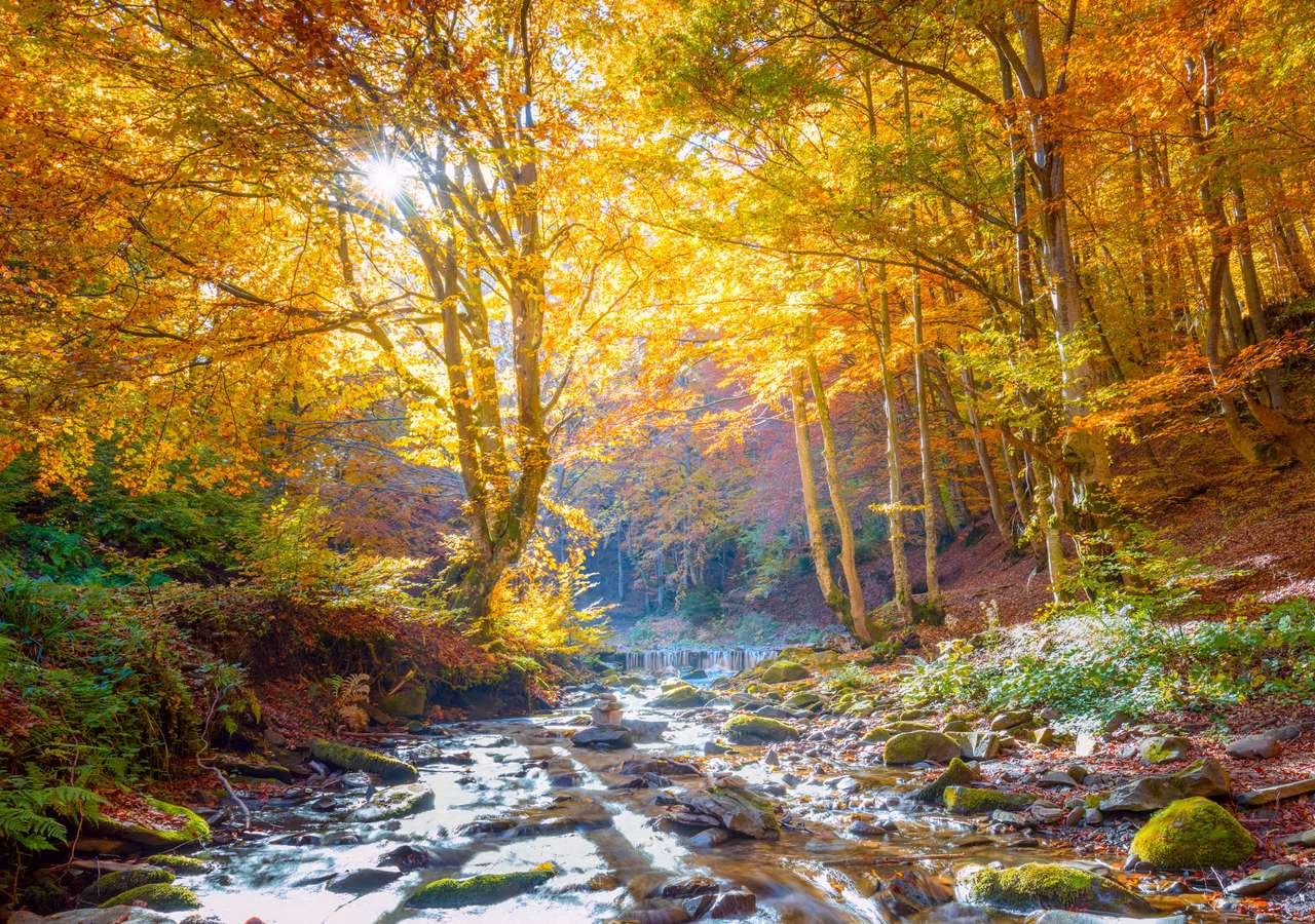 Vibrant copaci forestieri