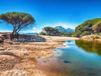 Maritime pine trees and Osala Beach