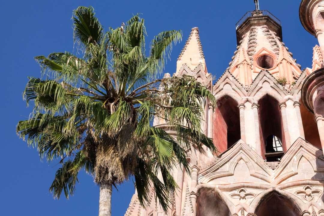 палмово дърво до бялата църква