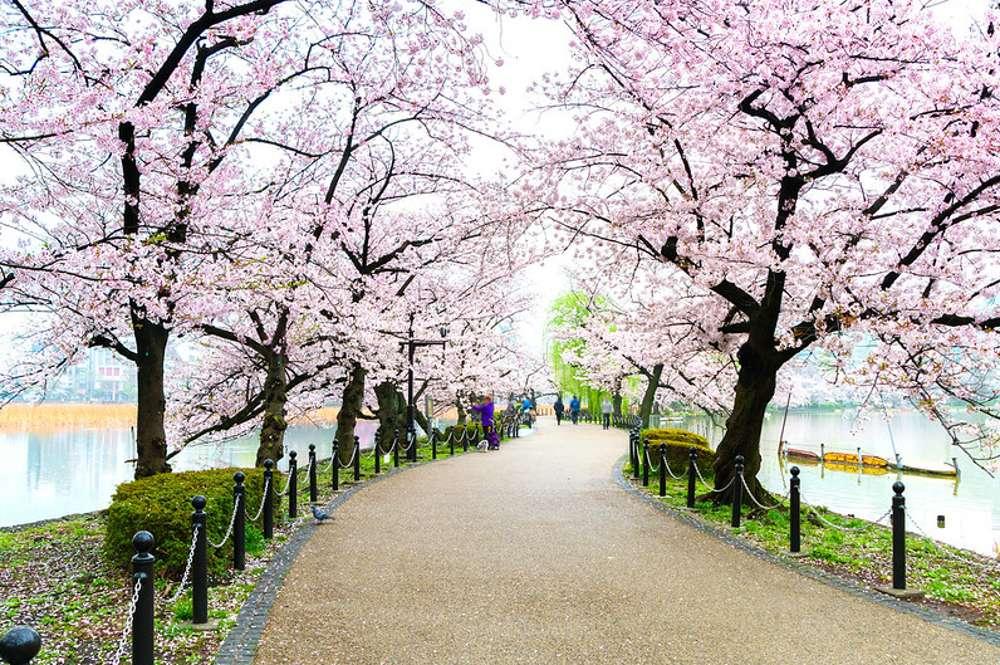 Park Ueno puzzle online