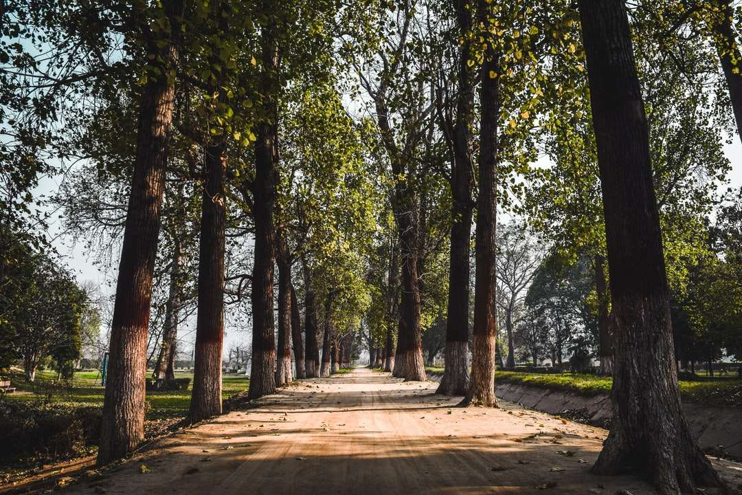 brown pathway between green trees during daytime online puzzle