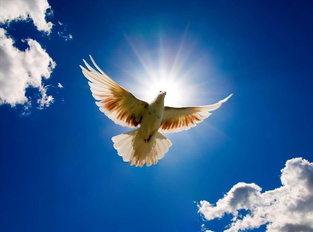 pigeon in flight puzzle