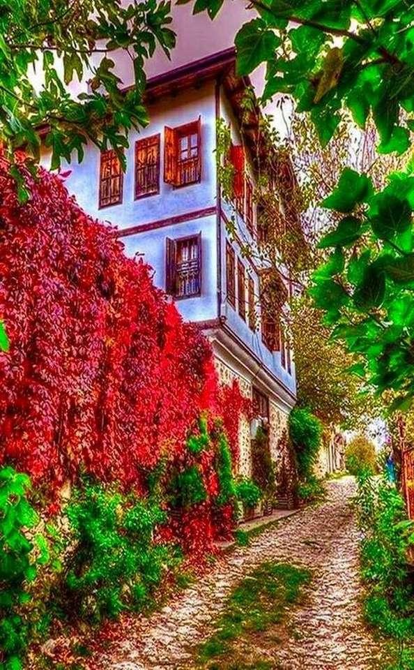 ogrodzenie z bluszczu