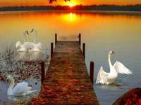 swans on the water puzzle