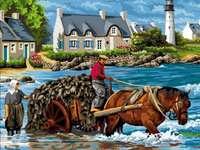 Skörd av tång i Bretagne online puzzle