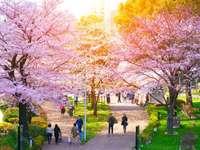 Park Kwitnącej Wiśni