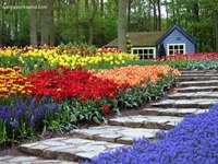 Schöner Blumengarten Online-Puzzle